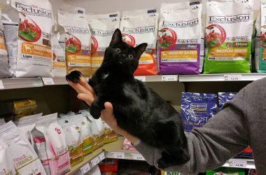 We & Pets Negozio per animali - Zanica Bg