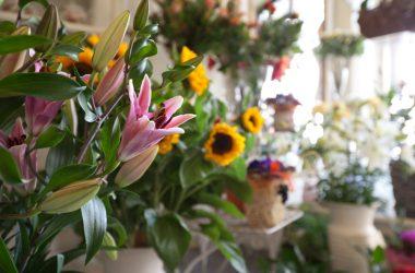 Fiorista I fiori di Palazzi Piante e Fiori - Leffe