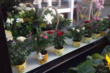 I fiori di Palazzi Leffe