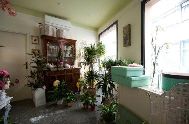 I fiori di Palazzi Piante e Fiori - Leffe Bergamo