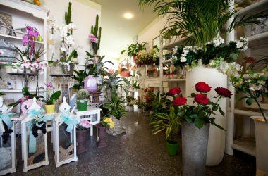 I fiori di Palazzi Piante e Fiori - Leffe Bg