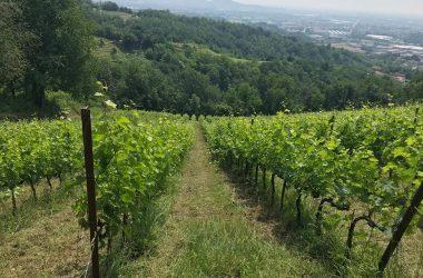 Vino Agricola Le Driadi - Palazzago