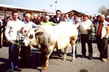 premiazioni-macelleria-coter-gandino-macellerie-valgandino-valle-seriana-Negozi-Carne-valseriana